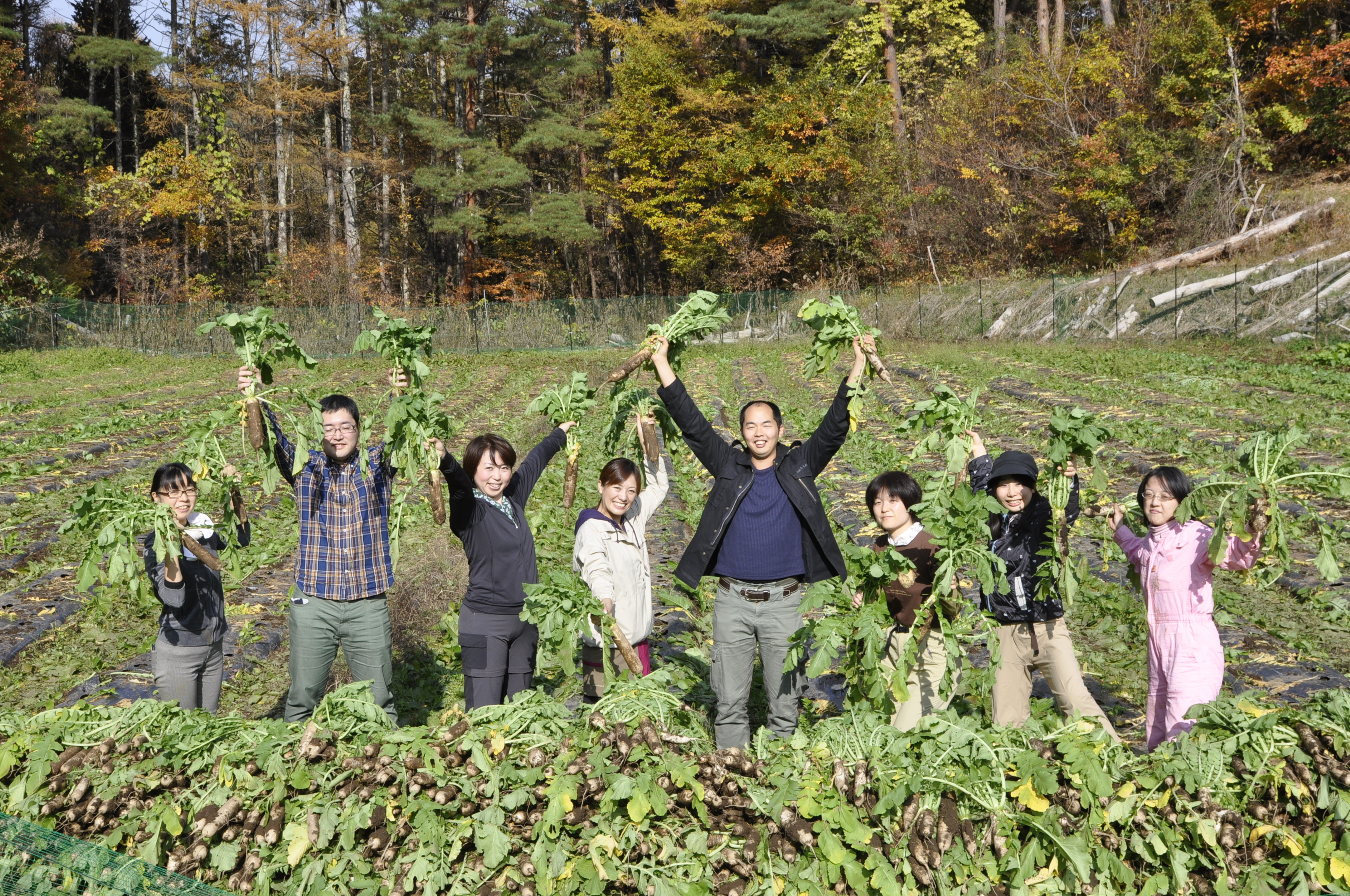 長野県諏訪市上野大根プロジェクト